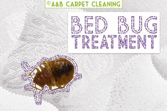 Bed Bug Treatment - Stable Brooklyn 11218